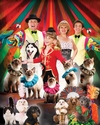 Click here for Grand Country's Amazing Pets Show information, schedule, map, and discount tickets!